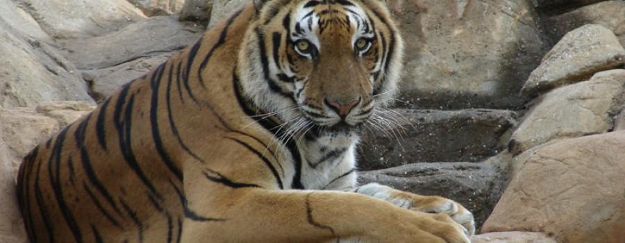Tiger Creek Safari Resort | Tyler TX, East Texas RV Resort